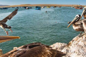 Ilhas Ballestras – Reserva Nacional de Paracas