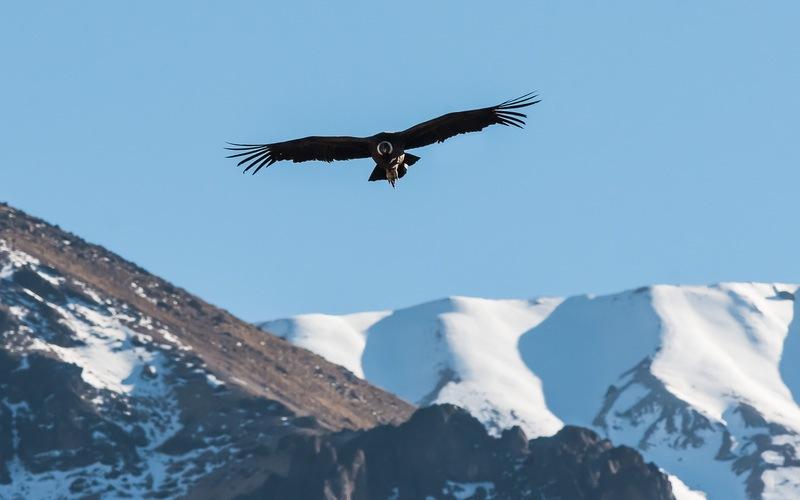 O voo do condor, Arequipa
