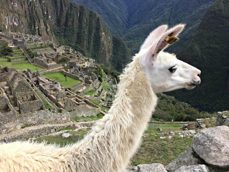 Hotéis no Peru: passeio em Machu Picchu