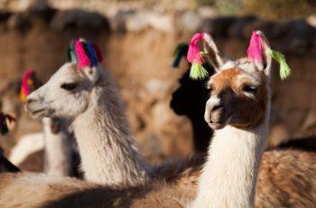 Carnaval em Machu Picchu: vale a pena visitar no período?